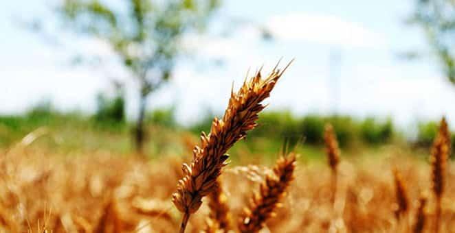 poljoprivreda-662x340